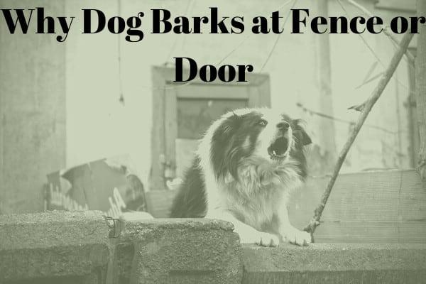 stop dog barking at fence