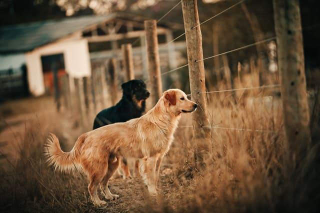 dog digging under the fence