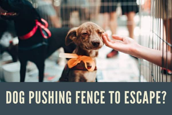 stop dog from jumping fence