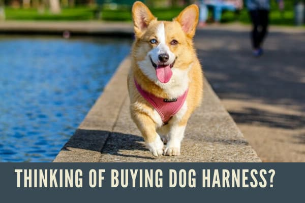 best collar for large dog that pulls