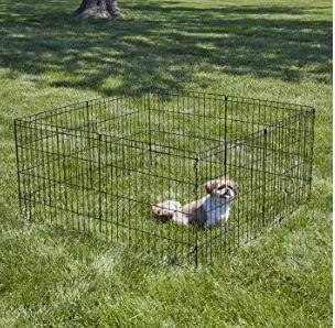 dog barking at fence