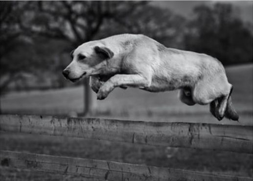 how to stop dog from jumping gate