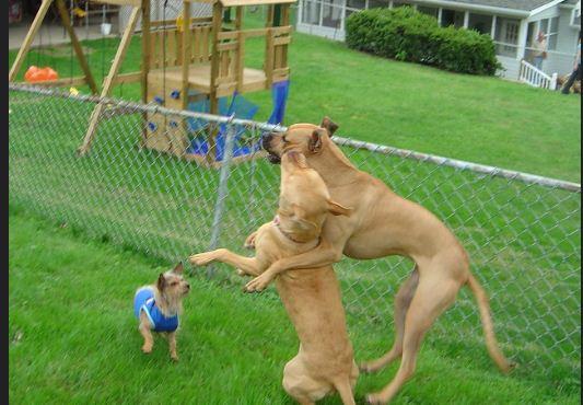 how stop barking dog