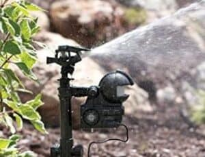 best motion activated sprinkler for cats