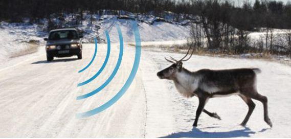 deer deterrent for car