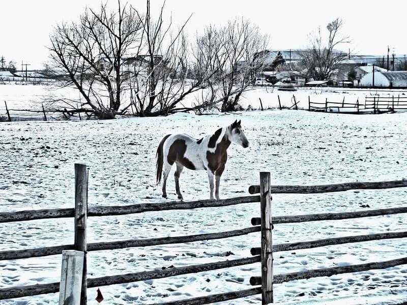 Winter fencing