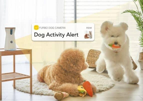 best dog camera treat dispenser