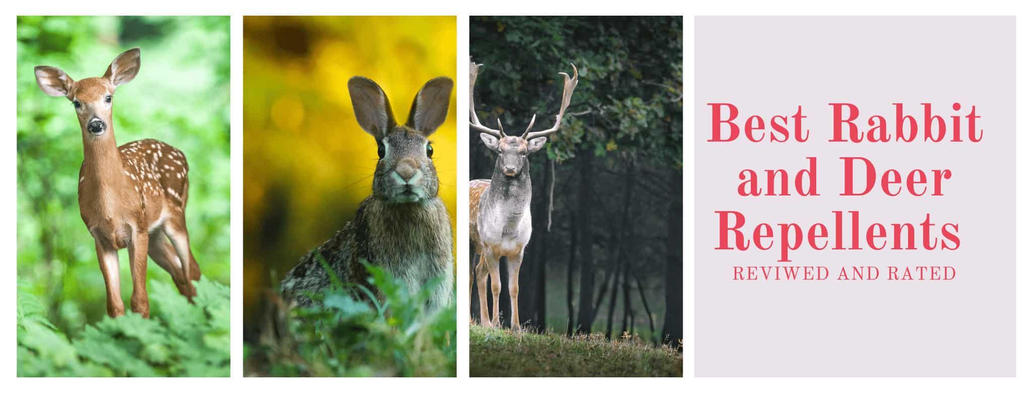 best Deer & Rabbit Repellent