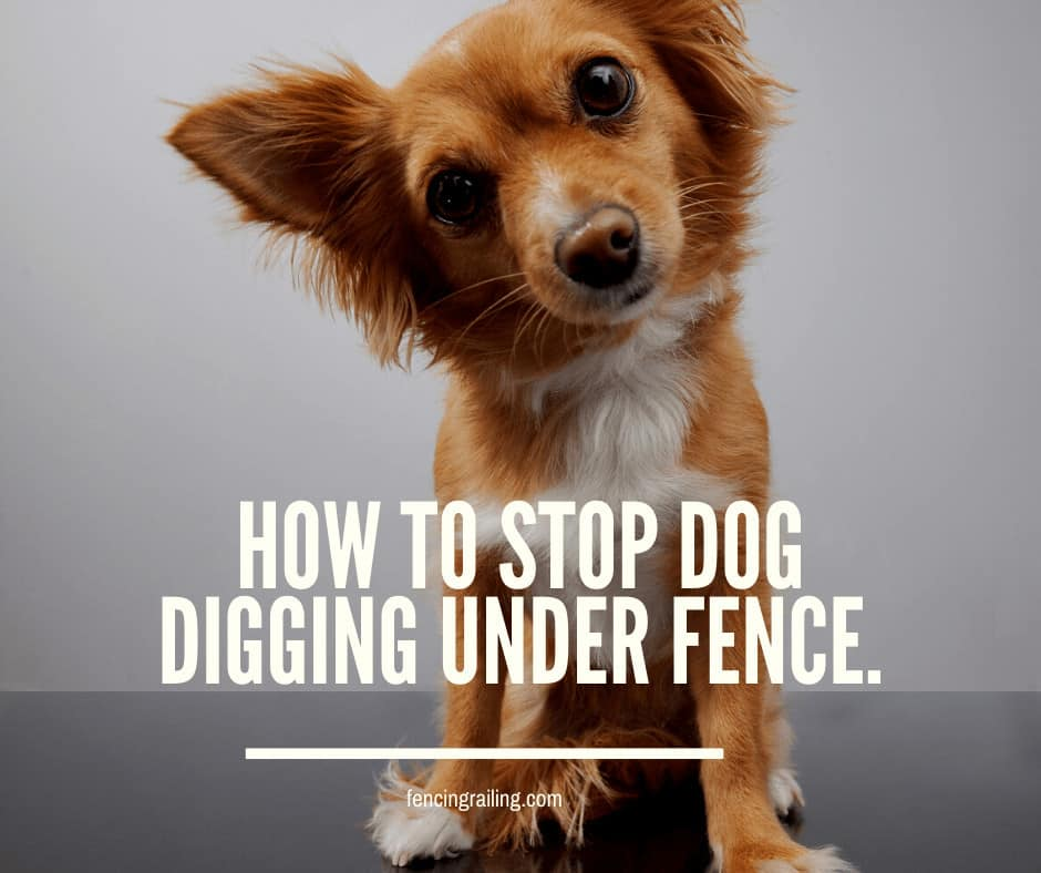 how to stop dog digging under the fence